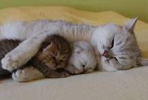 Cat's Me-owww, Family Pics