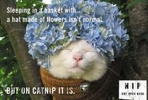 Cat's Me-oww, Asleep