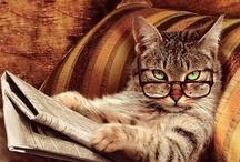 Cat's Me-owww, Tabbies