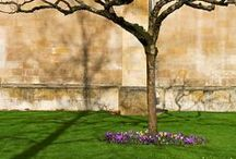 France - Front Courtyard / by Colin Campbell-Austin
