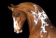 HORSE STORY Part. 1 / Horses (dark background)