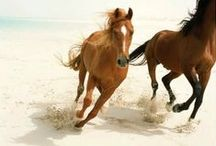 HORSE STORY Part 2. / Horses in motion