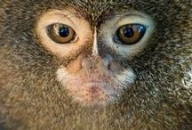 MONKEY TOWN / monkeys / singes