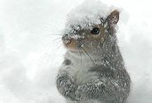 W I N T E R / winter, ice, snow, fog, white