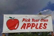 Apple Recipes!! / Apples are in season!!! Some fun apple recipe ideas!!