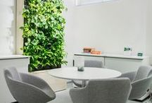 Naava smart green wall in office spaces