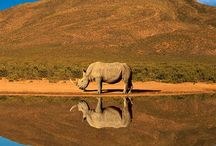 South Africa 9082