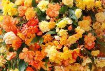 Flores/flowers...