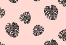 Surface pattern design by Boss and Dearie / Sunshine Coast Graphic Designer bossanddearie.com