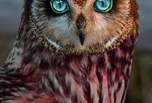 χρωματιστά ζώα