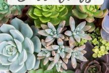 Plants / Plants for the home. Hard-to-kill plants. Succulents.