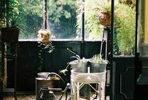 jardin / by Joyce Lee