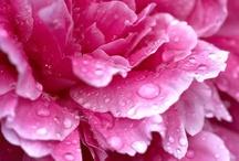 Pink / by Karen Rand