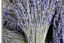 Lavender Blue / by Karen Rand