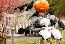 Pumpkins, Pumpkins, Pumpkins / by Kandra Phillips Powers