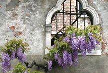 Lavande ....Purple in all its Glory