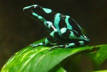 Reptiles / by Kim Ergin