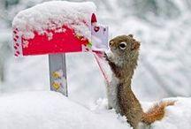 Winter / by Kim Ergin
