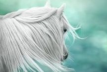 Horses  / Beautiful horses, horse themed party invitations, horse gifts, anything to do with horses!