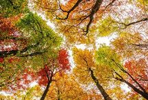 The Beauty of Fall / by Kim Ergin