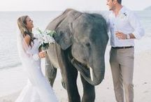 Thailand Wedding / The inspiration for your dream Thailand Wedding!