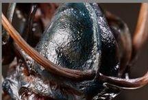 skull biopunk / skull biomechanical giger alien xenomorph factory assembly line
