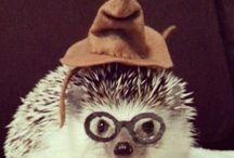 Hedgehogs (Just Cause!) ❤️