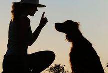 Doggie Training