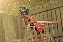 animal kingdom / by Nicke Cutler