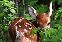 Cute animals I love