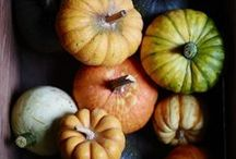 pumpkin love / by Nichol Wilson