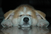 Puppsss <3