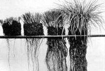 Soil / by julia