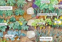 Gemüsegarten / alles rund um den Nutzgarten, biologisches Gärtnern, Gemüseanbau, Mischkultur, Bodenverbesserung