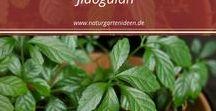 Kräutergarten / Kräutergarten, die schönsten Kräuter für den Garten, Kräuterwissen, Gartentipps