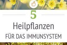 Heilpflanzen / Wildkräuter, Heilkräuter, Gesundheit, Superfood, Verwendung, Rezepte, Salben, Öle, Gartenkräuter,
