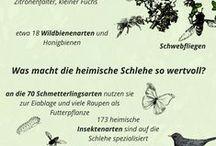 Hecken Naturgarten / Hecken im Naturgarten, Hecken zur Gartengestaltung, Sichtschutzhecken, Naturgarten Sichtschutz, Singvogelhecke, Vogelschutzhecke, Heckenpflanzen, Heckensträucher, Hecken für Insekten