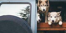 Dog Days of Camping