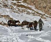 Cacería en Kirguizstán