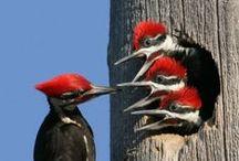 Fauna: Birds  / by Lee Hethcox