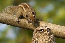 Fauna: Owls / by Lee Hethcox