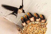 Animal, Bird & Insect photos / by Paula J