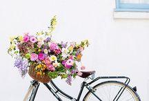 Splendid Summer / by Christina Simpson