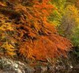Killiecrankie by Pitlochry / Killiecrankie is a beautiful little villiage in Highland Perthshire, near Pitlochry