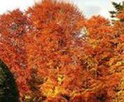 Craigatin Trees Pitlochry Scotland