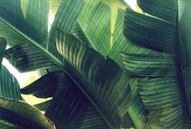>>> Plants <<<