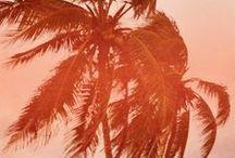 >>> Tropical <<<