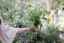 G A T H E R / Harvested Botanicals / by S.Marie Zins