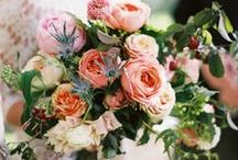 BOUQUETS | BLUSH / All shades of Pink Pink cheeks / by S.Marie Zins