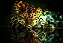 Wild & Exotic Earth! /  Beautiful photos & paintings of the world of animals ! / by Yve     C. Hancock